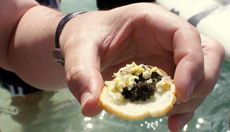 Caviar als Vorspeise bei Seabourns Caviar in the Surf