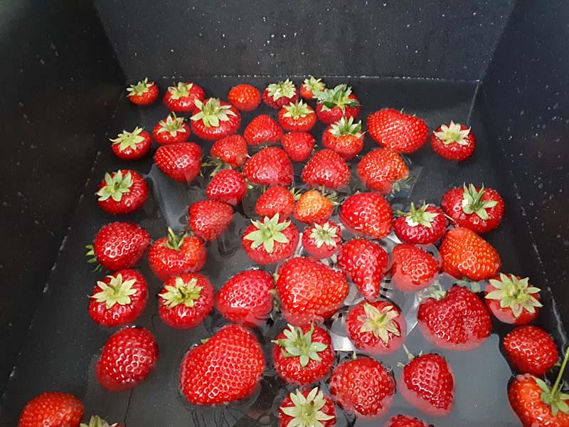 Erdbeeren richtig waschen