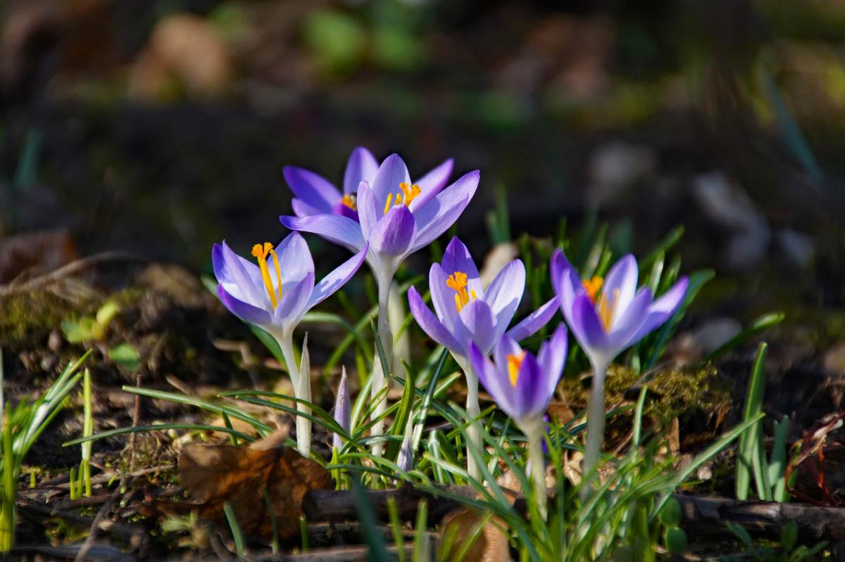 Fotoparade: Endlich Frühling – meine schönsten Frühlingsfotos