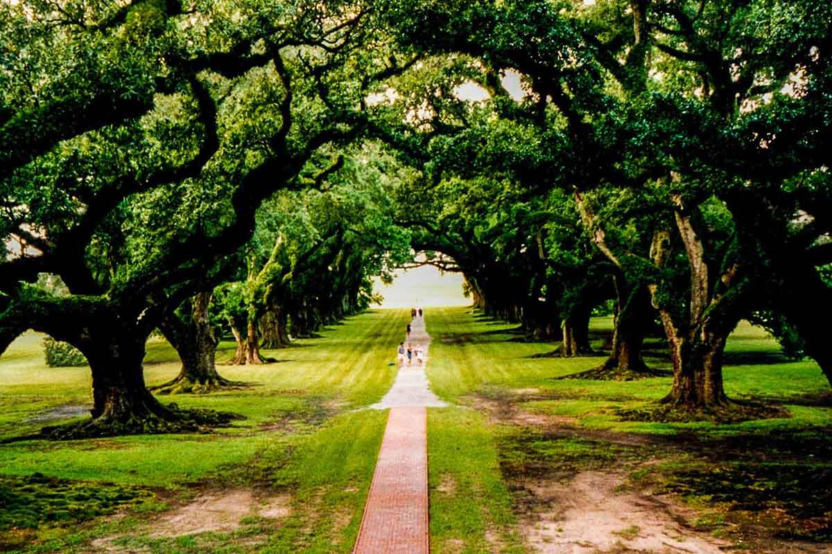 So schmeckt New Orleans - 5 kulinarische Erinnerungen an Louisiana